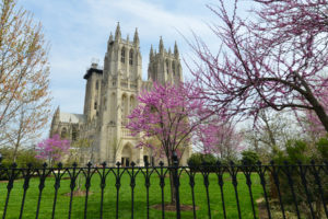 Cathedral Heights Washington DC Neighborhood Guide