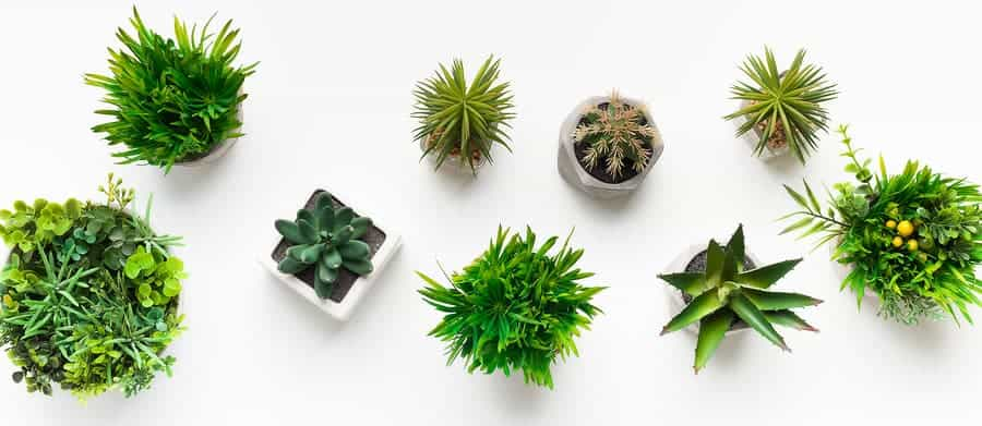 Where to Buy House Plants in DC - a Guide to The 6 Best Plant Shops 20
