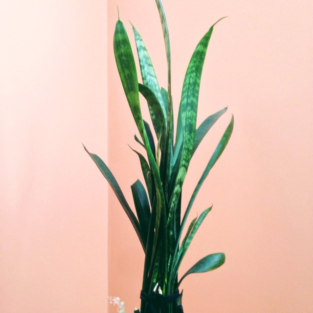 Where to Buy House Plants in DC - a Guide to The 6 Best Plant Shops 33