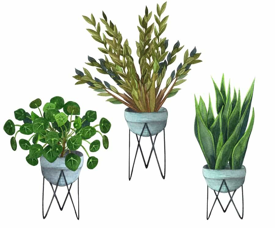 Where to Buy House Plants in DC - a Guide to The 6 Best Plant Shops 5