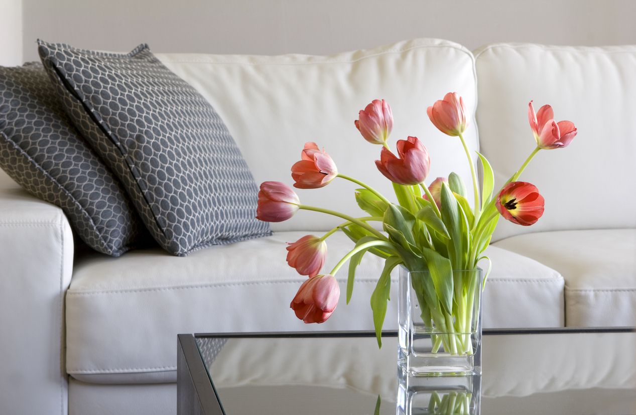 Fresh red tulips in living room to decorate your apartment for spring