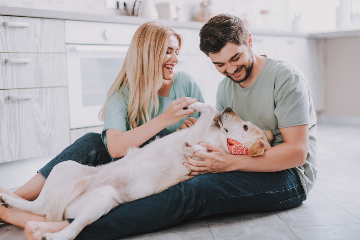 A smiling couple playing with their Labrador Retriever dog inside their kitchen.