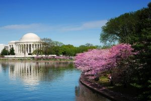 Find a job in Washington D.C