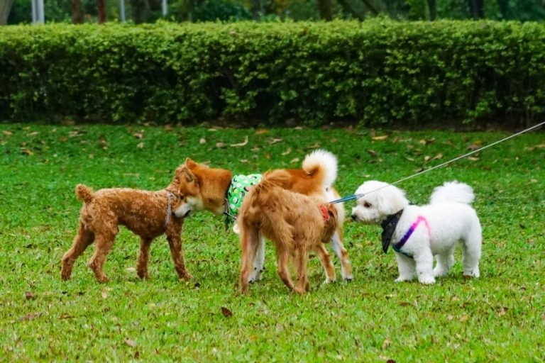 Best Dog Parks in D.C.