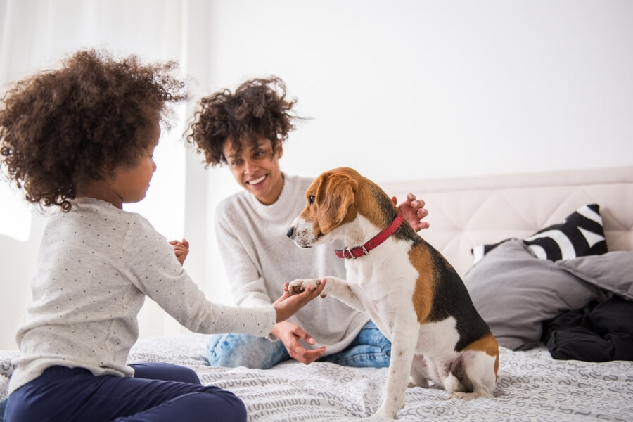 pet friendly apartments in DC