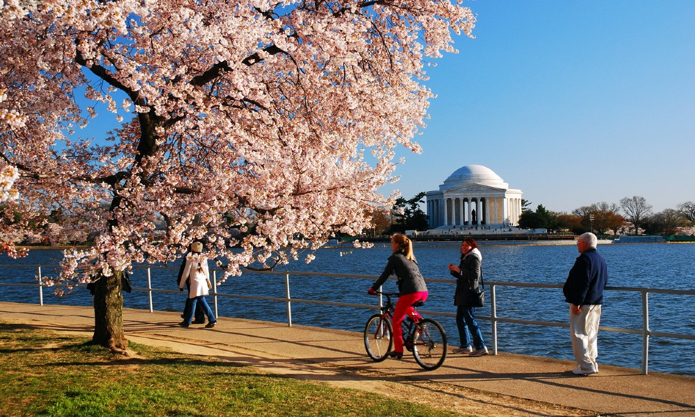 Bikers and walkers pass cherry trees and the Potomac with a view of the Washington Mall, illustrating the beauty of living in Washington, D.C.